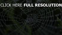 close-up tropfen spinnennetz