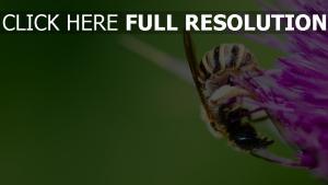pollen biene blume