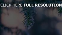 zweig tanne verschwommen frost