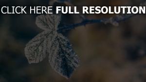 zweig frost winter kälte blätter