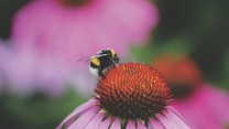 pollen blume hummel knospe