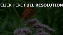 blume schmetterling insekt close-up