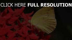 blume close-up flügel schmetterling gelb, rot