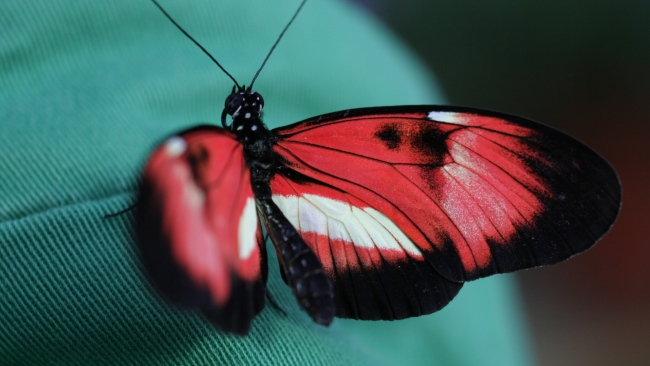 hd hintergrundbilder insekt muster schmetterling