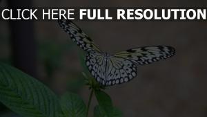schmetterling pflanze flügel flattern