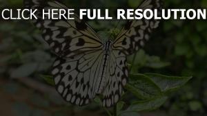 muster schmetterling pflanze flügel