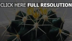sukkulent kaktus dornen