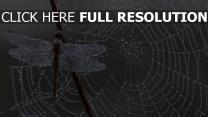 eis spinnennetz libelle tropfen