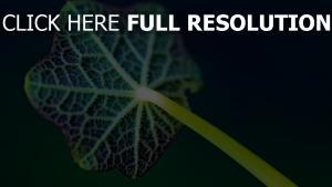 stengel blatt pflanze geäder