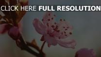 frühling blume blüte zweig