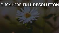 knospe blütenblätter blume unschärfe
