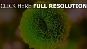 knospe grün close-up blume