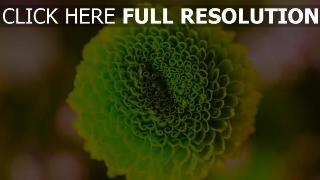 hd hintergrundbilder knospe grün close-up blume