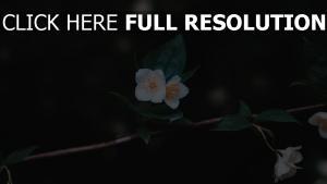 close-up blumen blüten zweig