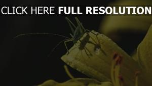 blätter insekt grashüpfer sonnenlicht