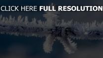 zweig winter frost raureif