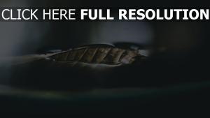 close-up trocken blatt unschärfe