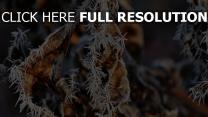frost kälte blatt trocken