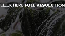 schnee frost blätter