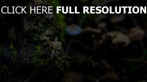 oberfläche moos close-up