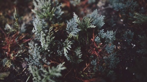 blatt pflanze close-up