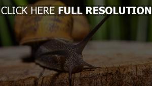 antennen schnecke close-up shell