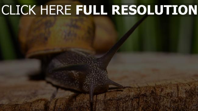 hd hintergrundbilder antennen schnecke close-up shell