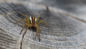 insekt close-up spinne