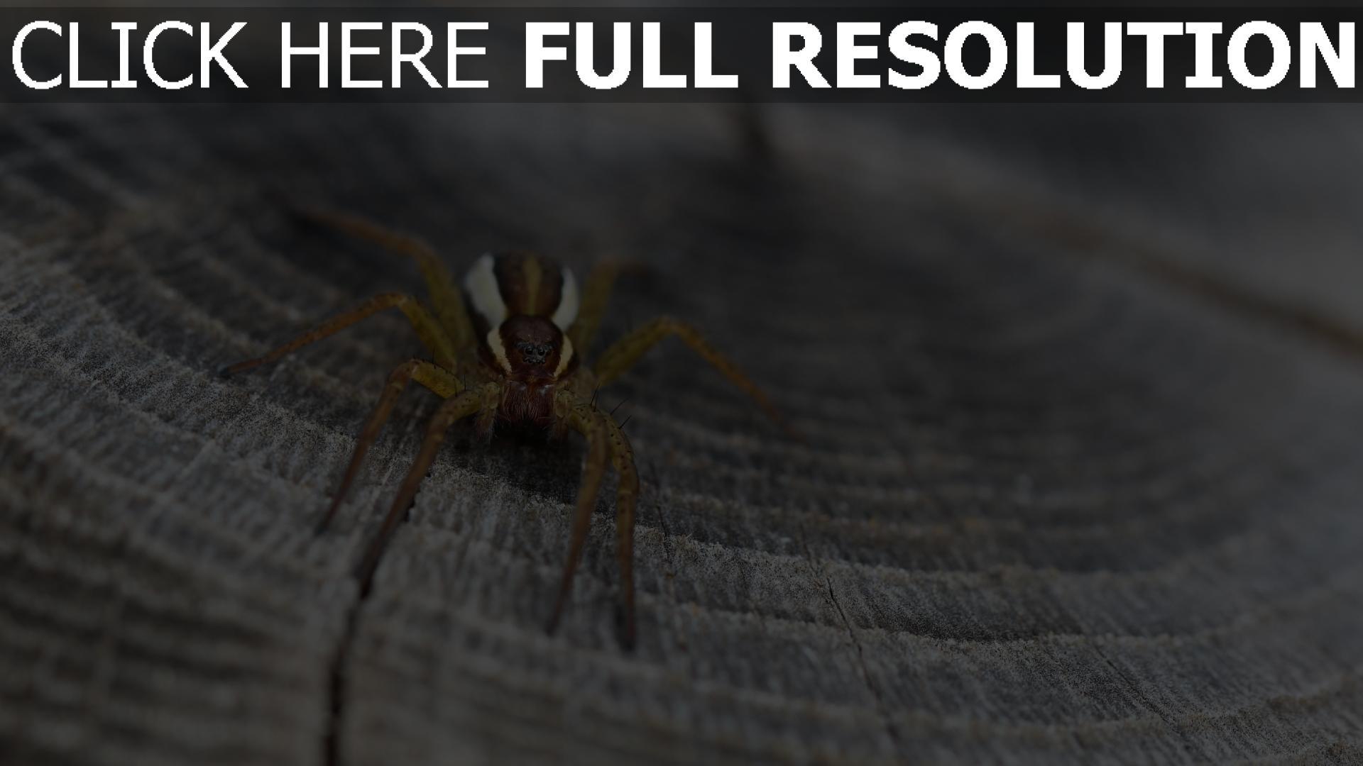hd hintergrundbilder insekt close-up spinne 1920x1080