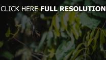 blätter spinne netz
