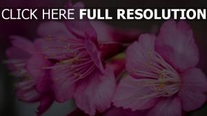 blumen rosa blütenblätter blütenstaub