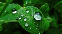 blätter tropfen pflanzen tau