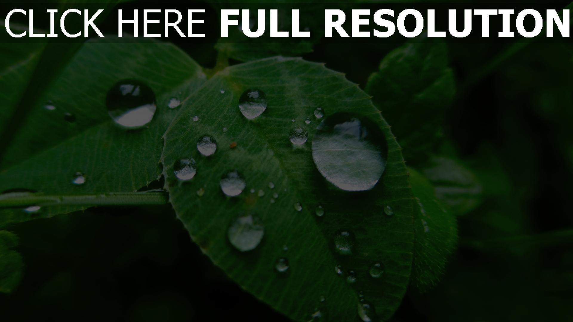 Hd hintergrundbilder bl tter tropfen pflanzen tau desktop for Green pflanzen