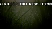 gras tropfen licht beleuchtung