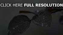 blätter zweig tropfen regen