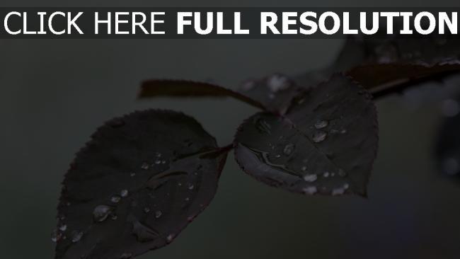 hd hintergrundbilder blätter zweig tropfen regen
