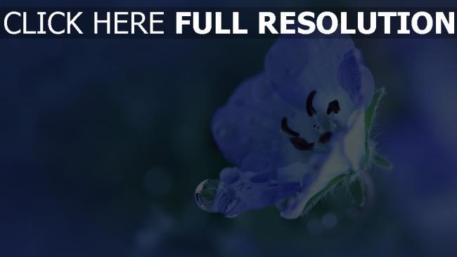 hd hintergrundbilder blume blau blütenblätter tropfen