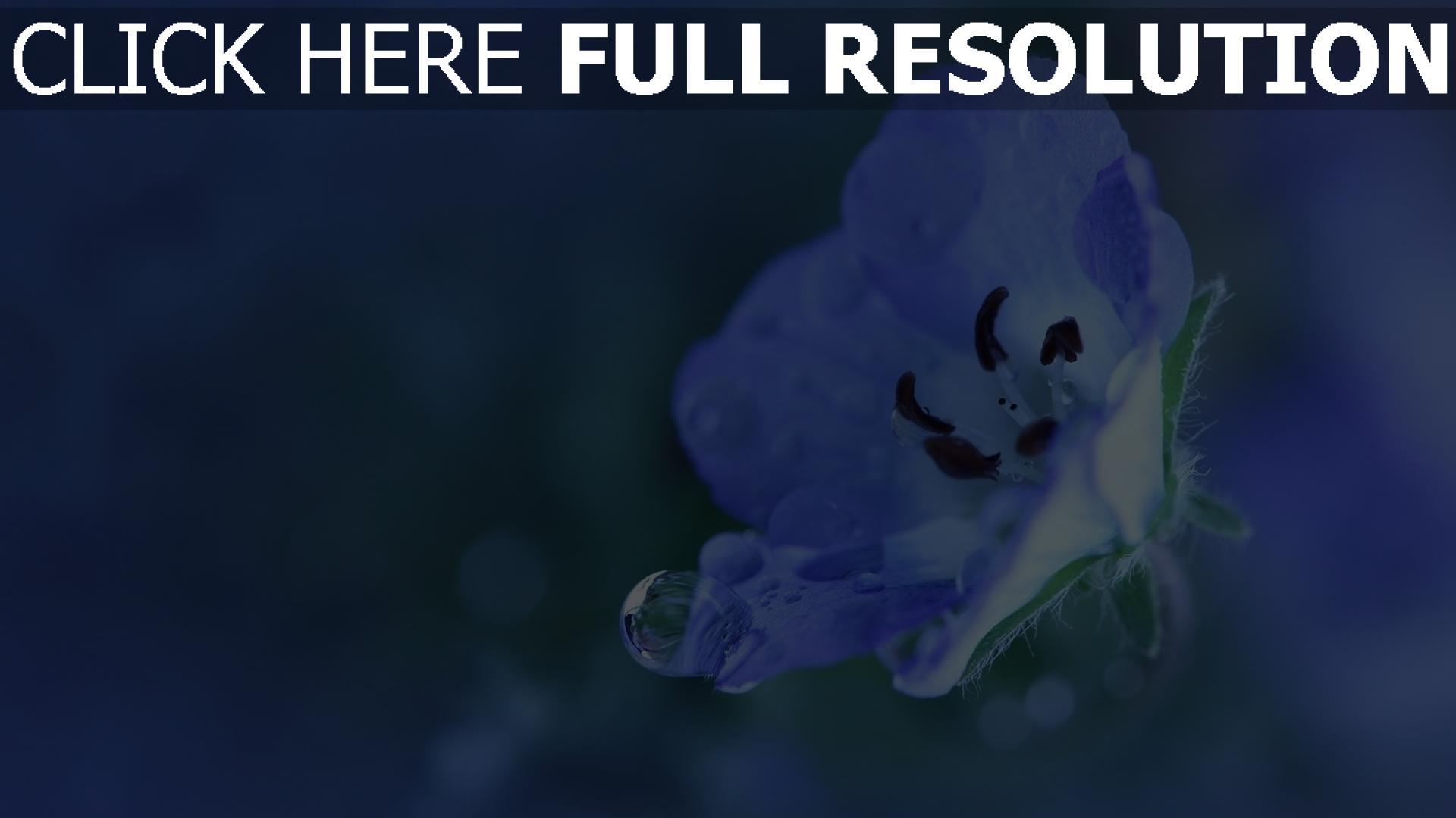 hd hintergrundbilder blume blau blütenblätter tropfen 1920x1080