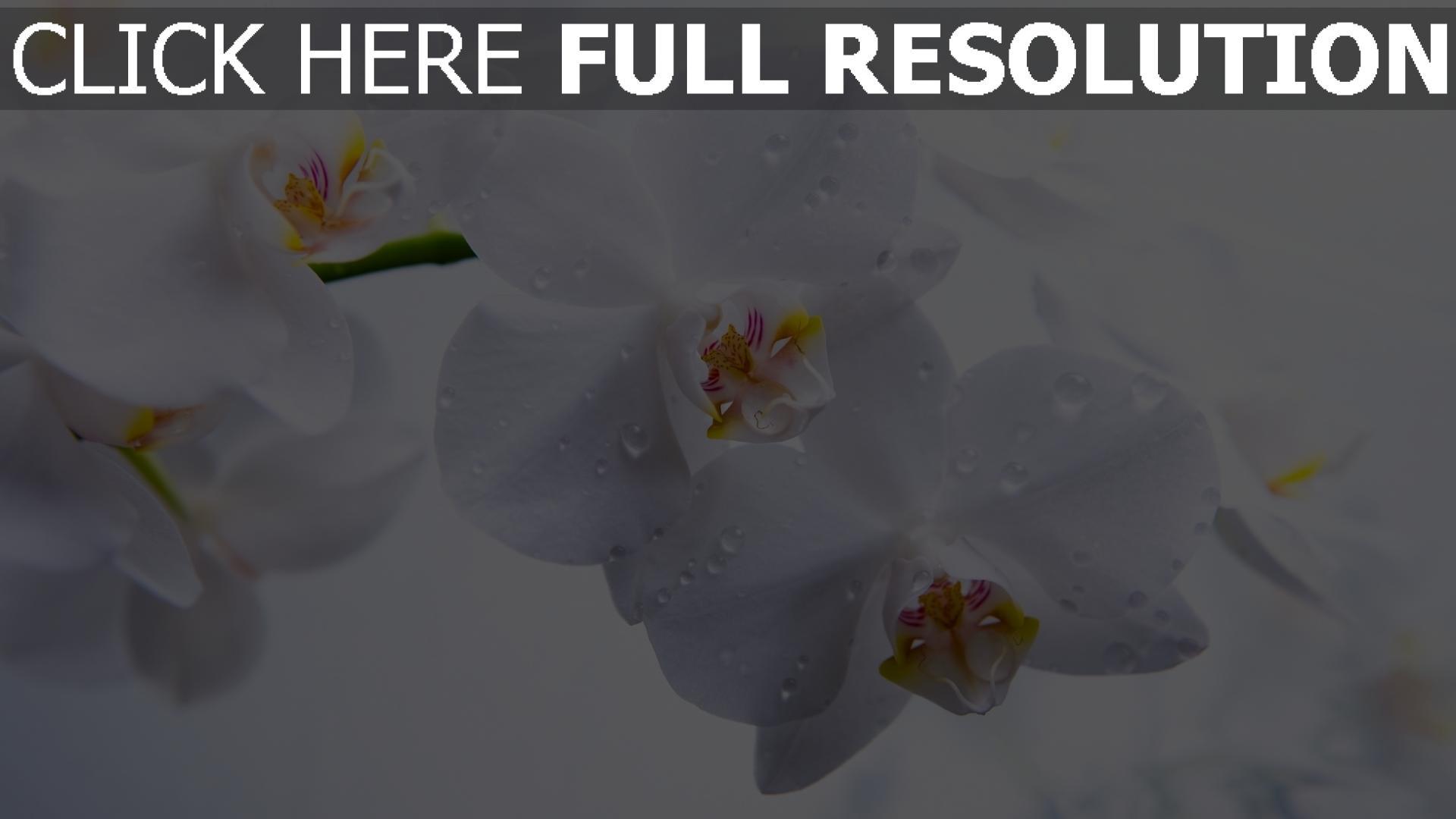 hd hintergrundbilder orchidee wei blumen tropfen desktop hintergrund. Black Bedroom Furniture Sets. Home Design Ideas