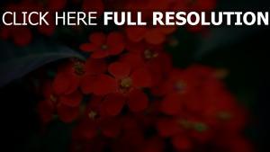 blumen blüten rot blätter