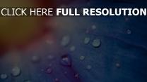 blütenblätter blau tropfen verwischen