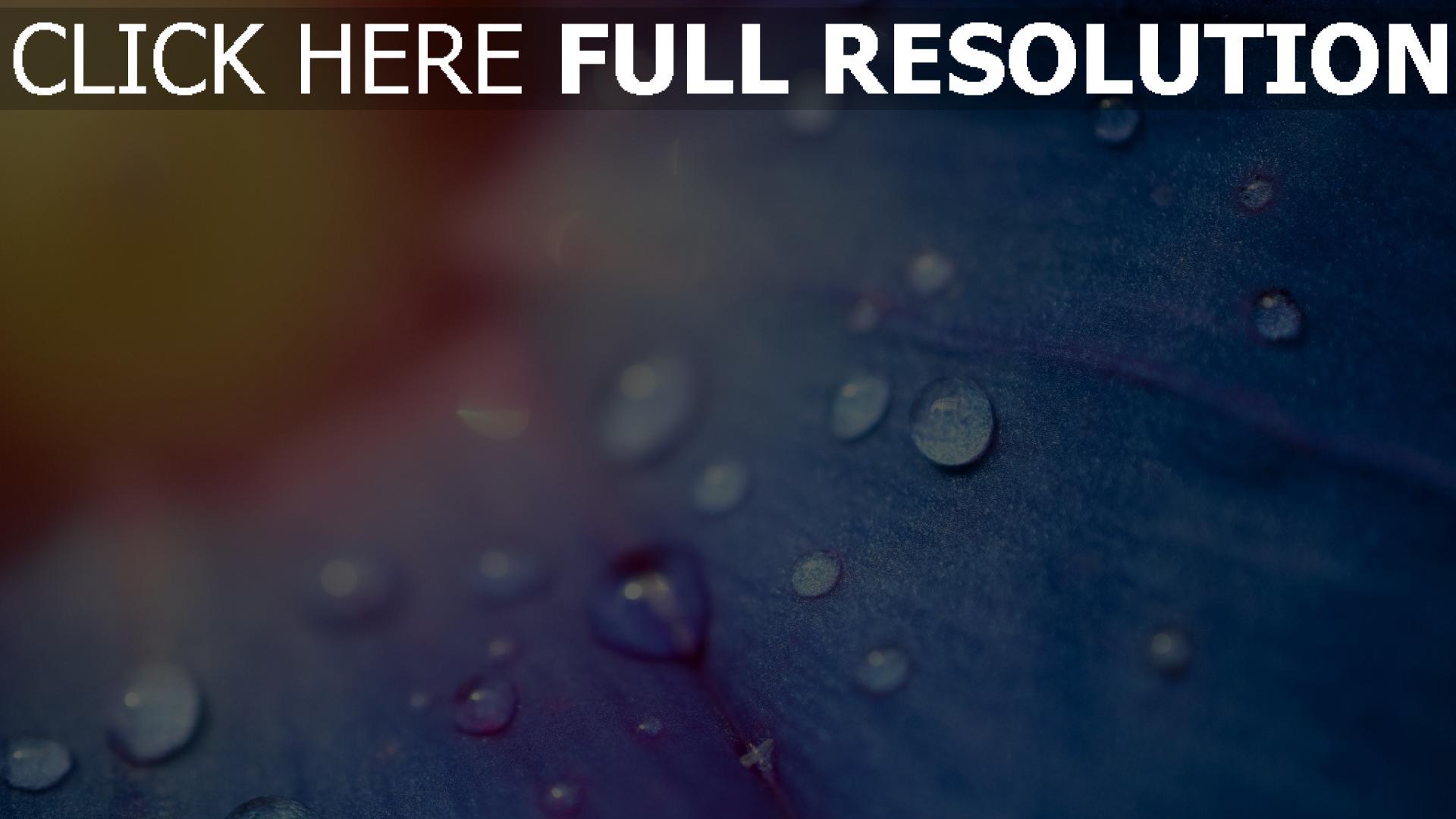 hd hintergrundbilder blütenblätter blau tropfen verwischen 1920x1080
