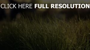 gras licht grün bokeh