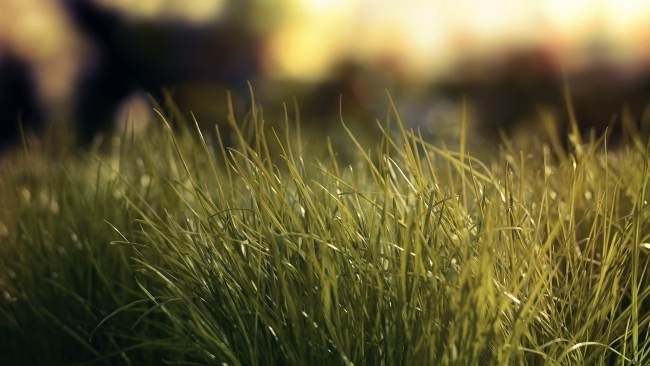 hd hintergrundbilder gras licht grün bokeh