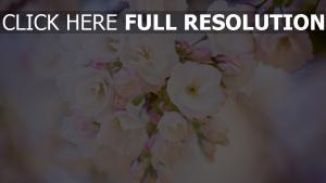 blumen blüten blüte frühling