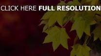 herbst blätter gelb hintergrund rot