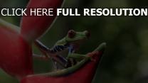 frosch grün augen rot blume