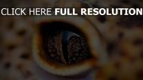 augen krokodil reptilien pupille