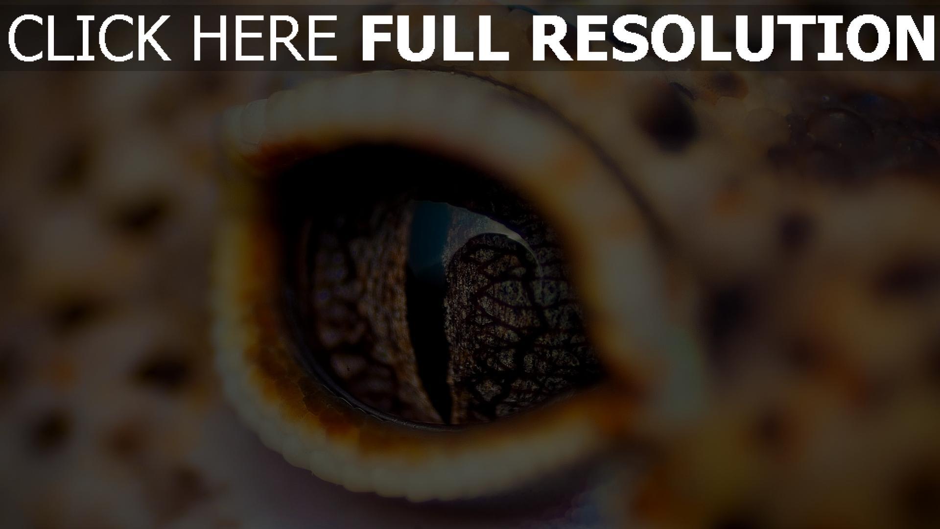 HD Hintergrundbilder augen krokodil reptilien pupille ...