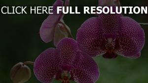 blumen orchideen beschmutzt lila